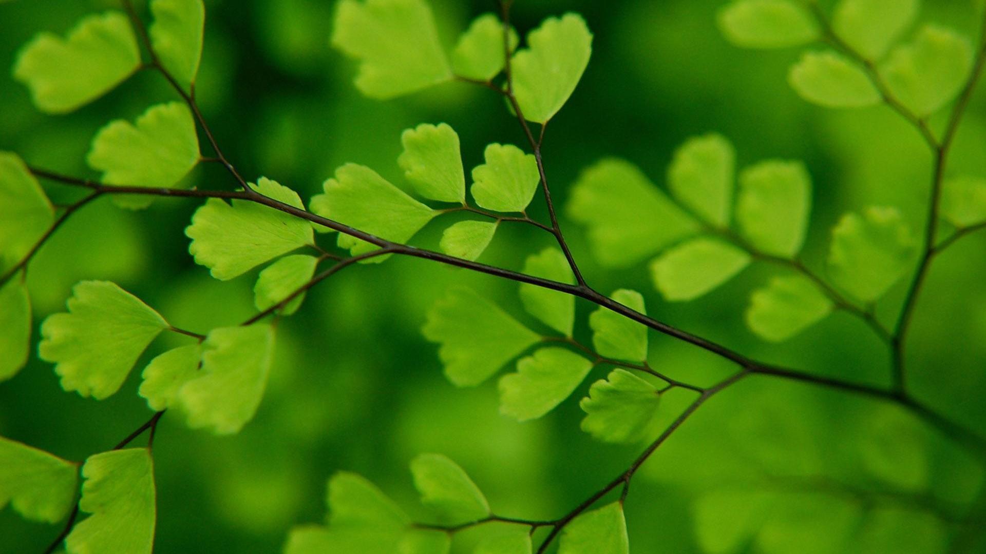 绿色风景高清壁纸