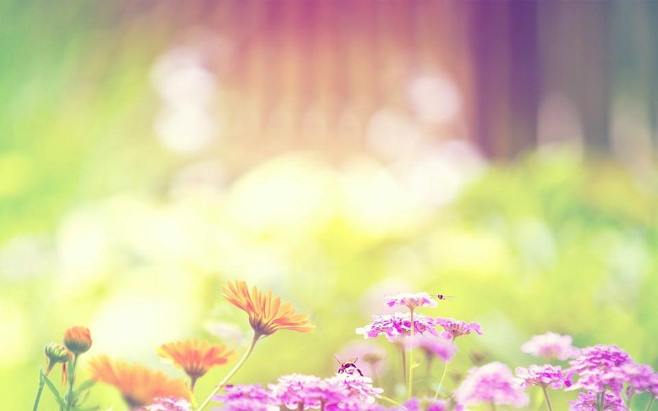 一朵花头像高清