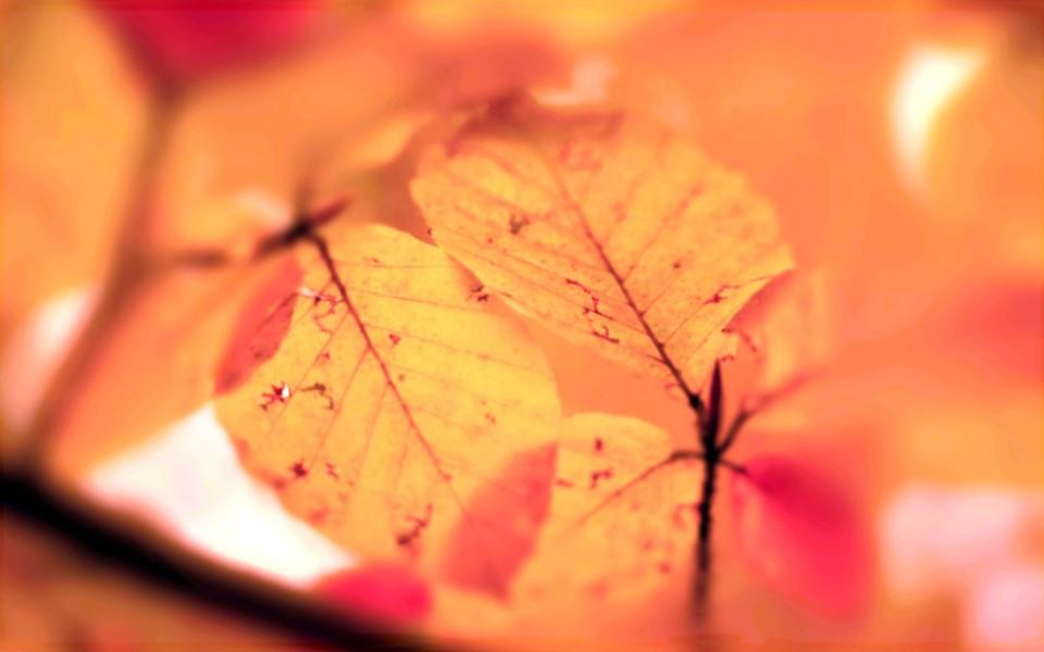 秋天的落叶桌面壁纸 第10页 ZOL桌面壁纸