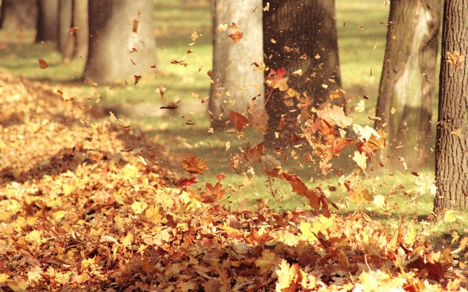 秋叶迷离高清壁纸 第6页-zol桌面壁纸