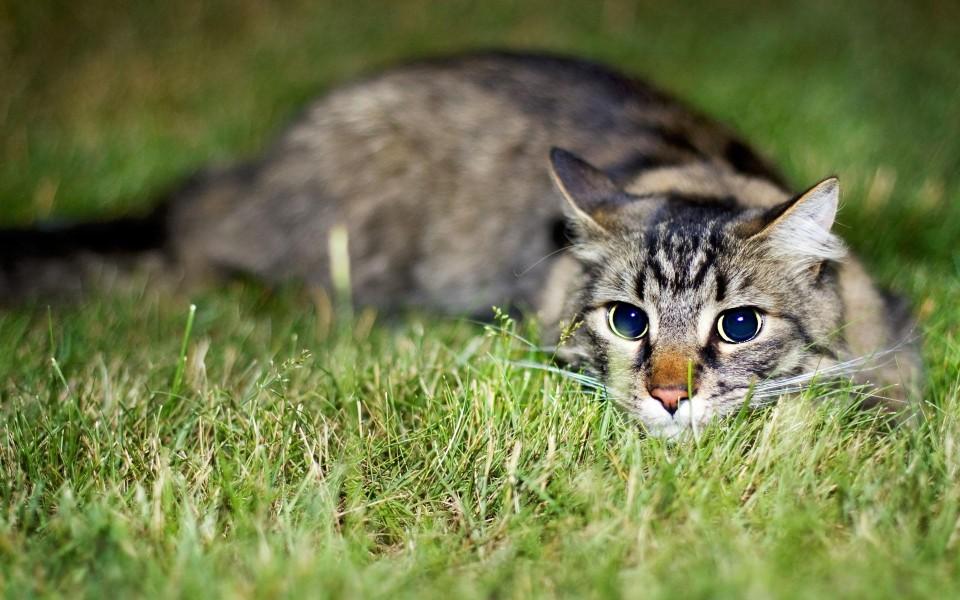 可爱猫咪高清壁纸 第16页-zol桌面壁纸
