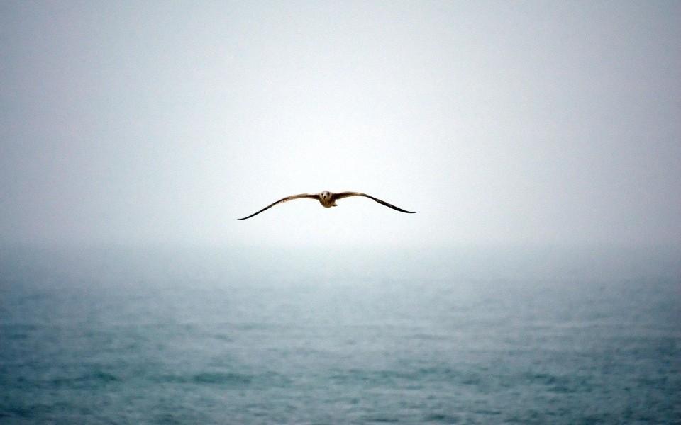 海鸥摄影高清桌面壁纸