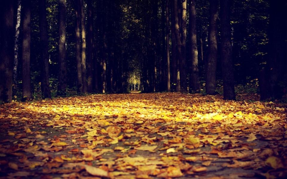 秋天林间小路风景电脑桌面壁纸