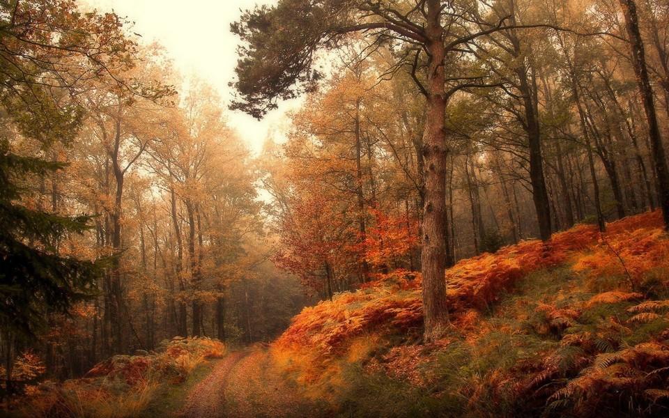 电脑壁纸 自然风景壁纸 秋天林间小路风景电脑桌面壁纸下载   (10/15)