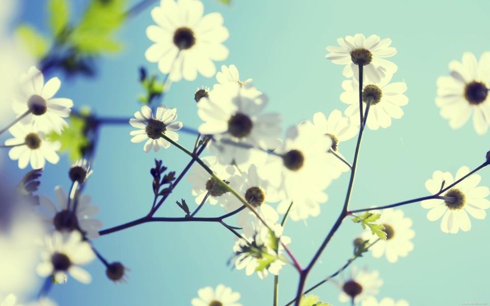 小清新意花卉超大壁纸(二)