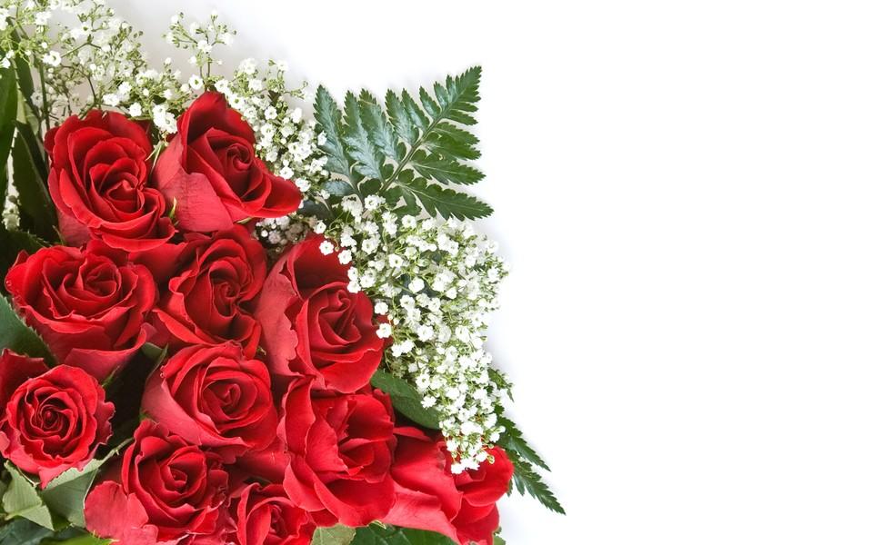 电脑背景玫瑰花-妖艳红玫瑰爱的告白壁纸图片