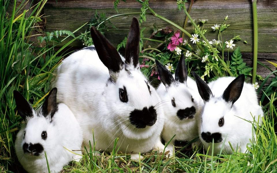 可爱小兔子高清壁纸 第23页-zol桌面壁纸