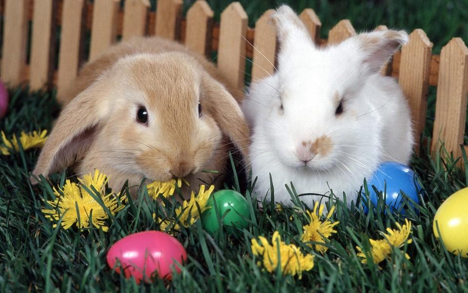 可爱小兔子高清壁纸 第24页-zol桌面壁纸