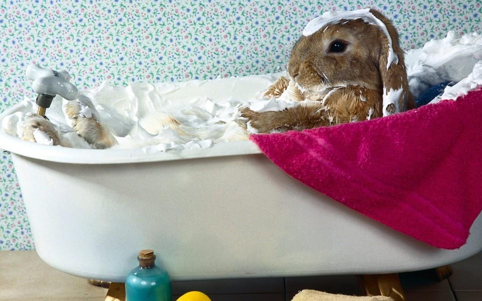 可爱 壁纸 小兔子/ZOL壁纸应用组件1.0