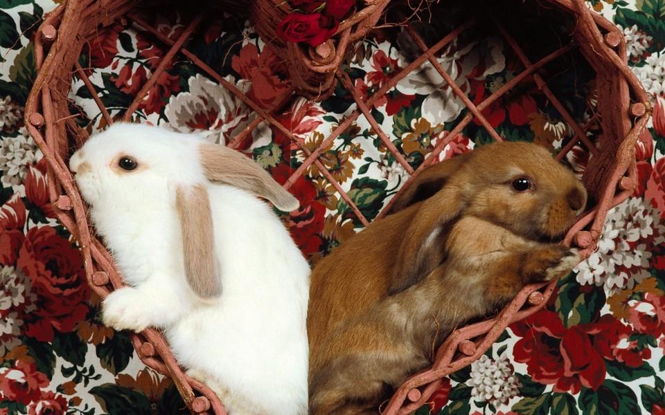 可爱小兔子高清壁纸 第29页-zol桌面壁纸
