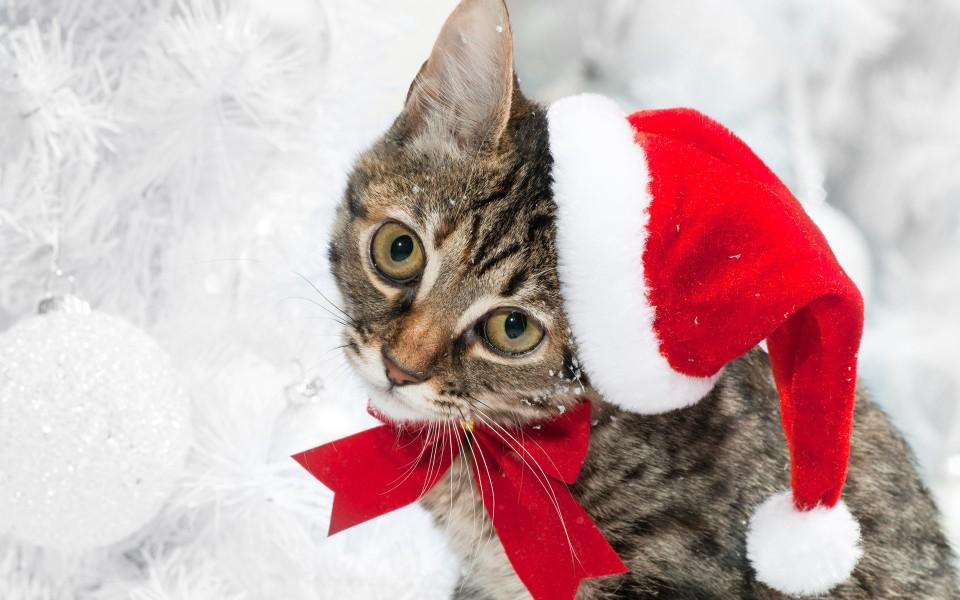 圣诞节可爱猫咪壁纸 第2页-zol桌面壁纸