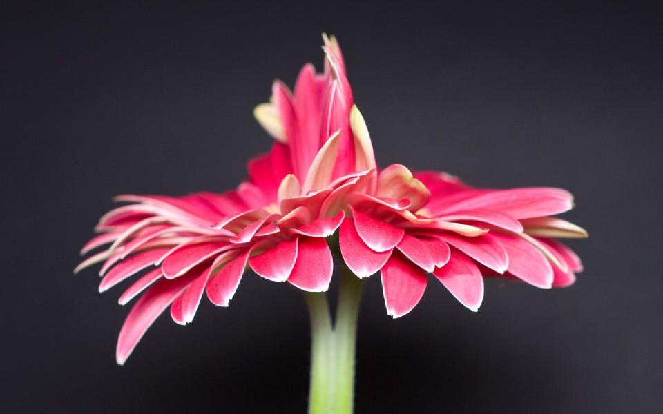花草唯美风景桌面壁纸