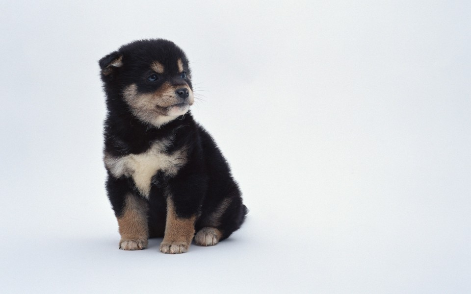 可爱小狗电脑桌面壁纸