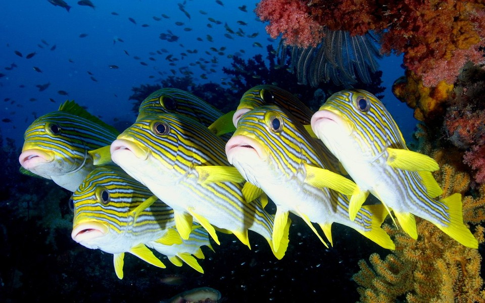 海底世界高清护眼壁纸