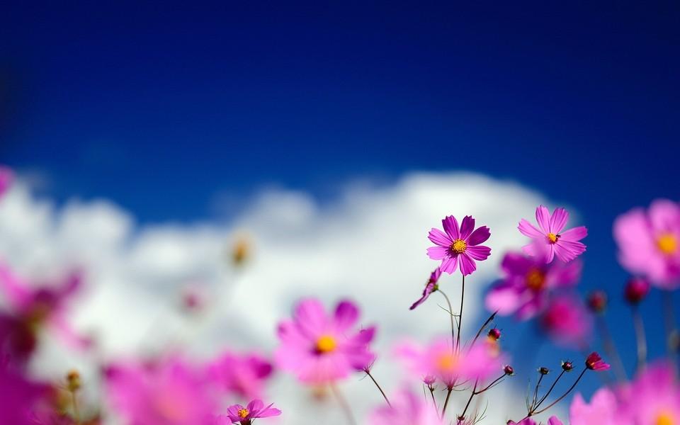 春天的小野花宽屏壁纸