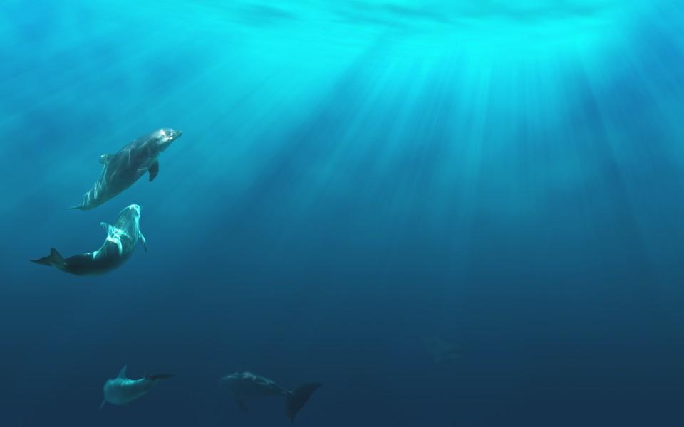 海底世界電腦壁紙高清 第9頁-zol桌面壁紙