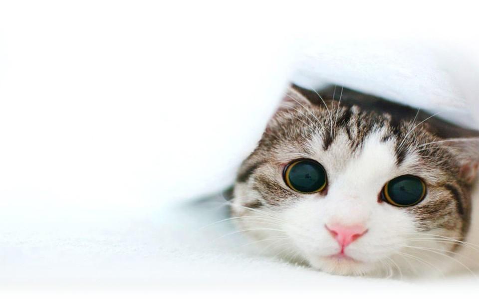 可爱的小猫电脑桌面壁纸