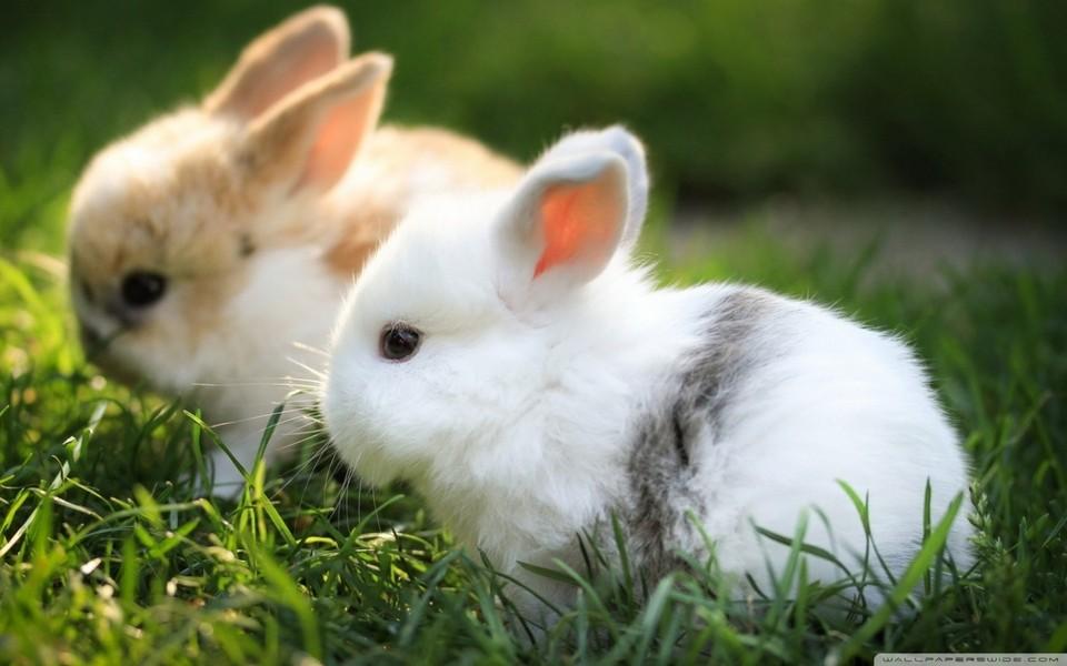萌宠兔子手绘图