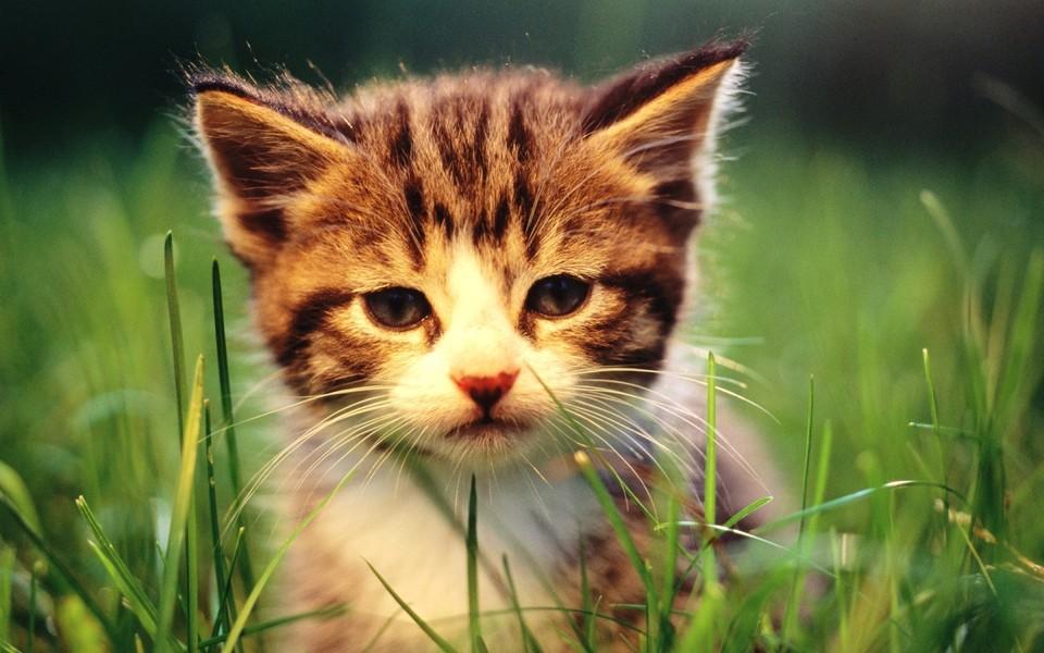 笔记本壁纸 萌猫壁纸 可爱萌宠猫咪电脑壁纸下载