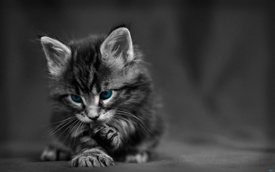 可爱萌宠猫咪电脑壁纸