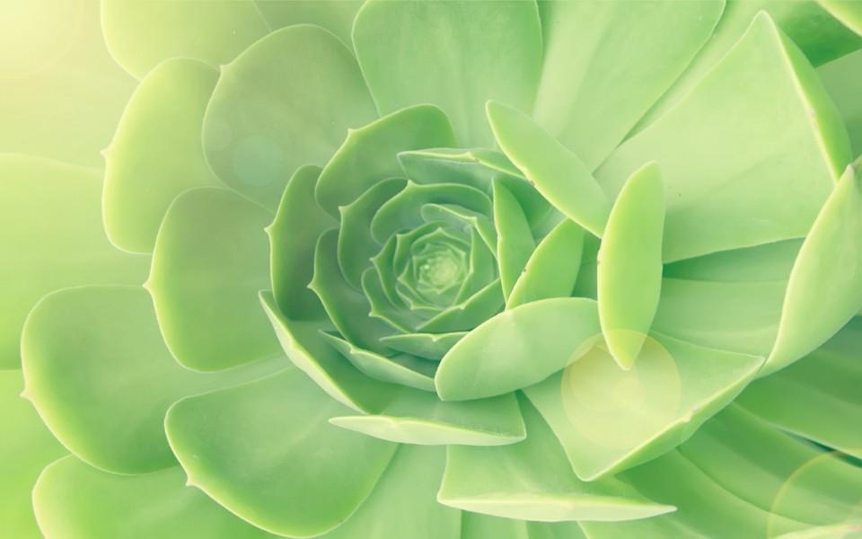 绿色植物唯美电脑壁纸