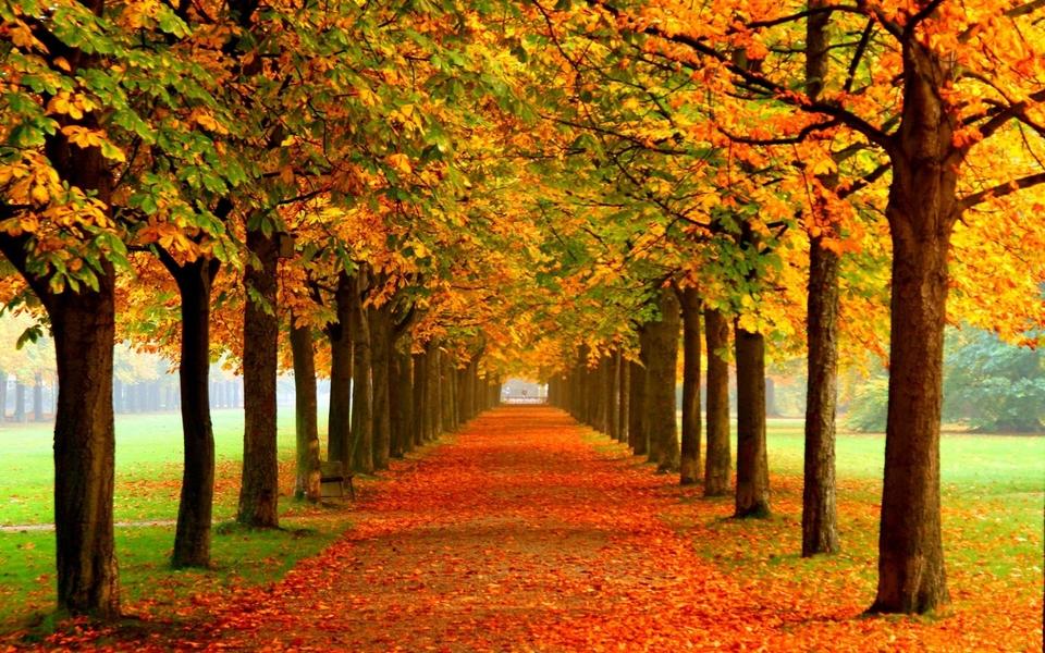 秋天的风景画高清壁纸 第7页-zol桌面壁纸