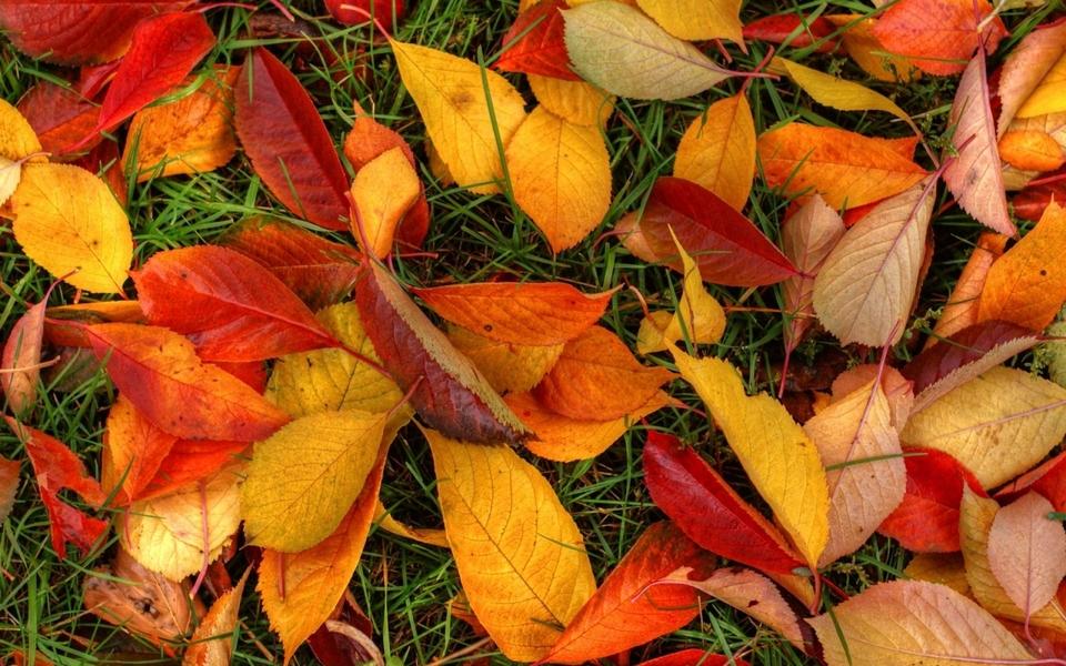 描写秋天的风景画画