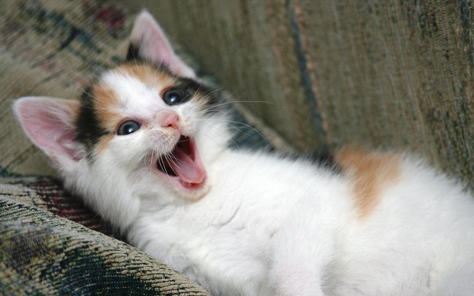 电脑壁纸 萌猫壁纸 高清动物壁纸桌面下载下载