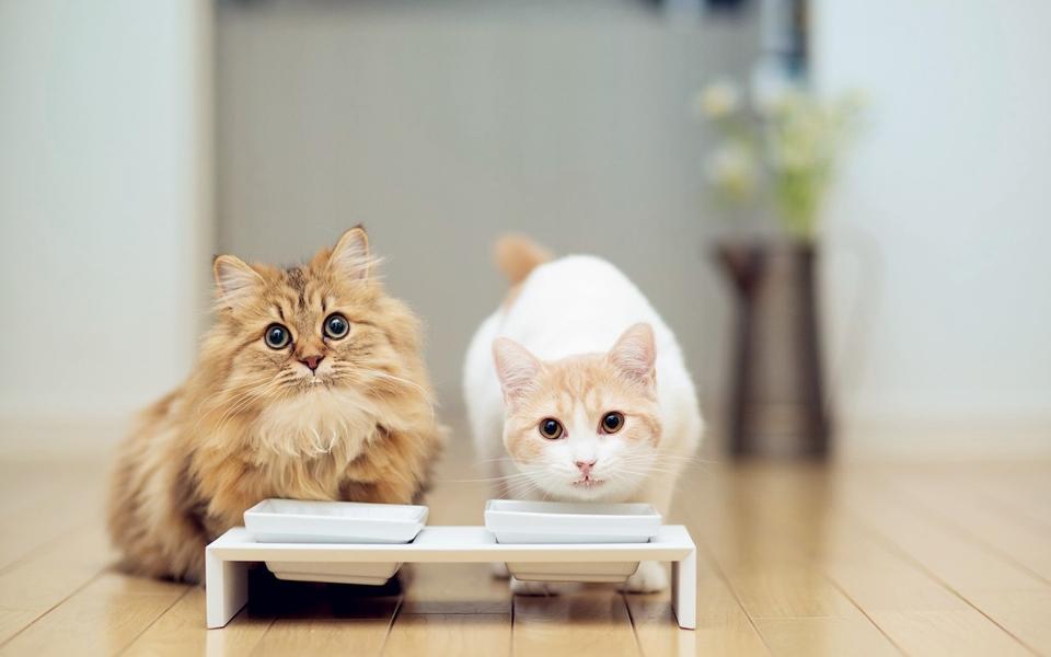 动物高清壁纸桌面