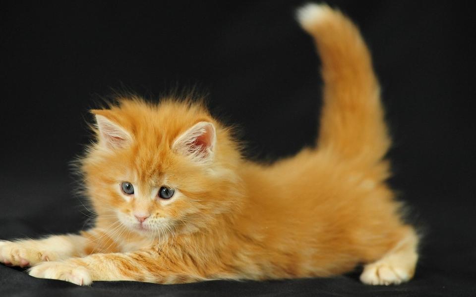 萌猫高清壁纸图片 第5页-zol桌面壁纸