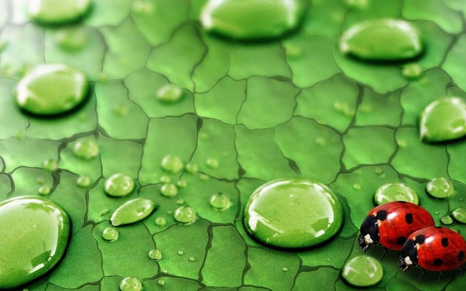 绿色养眼高清壁纸桌面