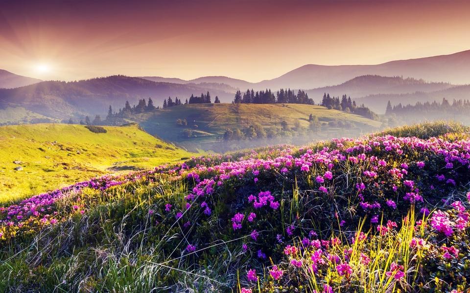 壁纸 成片种植 风景 花 植物 种植基地 桌面 960_600