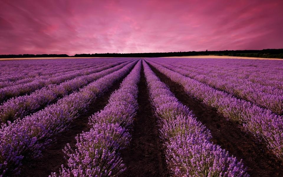 唯美意境壁纸 紫色风景壁纸桌面图集下载   (10/11) 小箭头图标亲~快