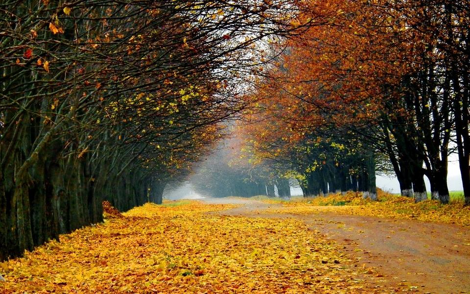 秋天自然景色壁纸图片