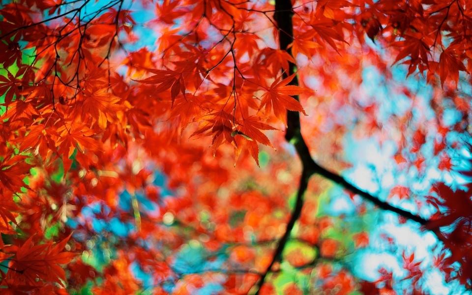香山红叶唯美壁纸图片