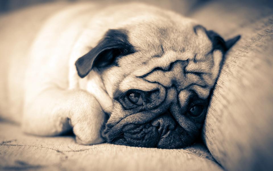 可爱狗狗高清壁纸桌面