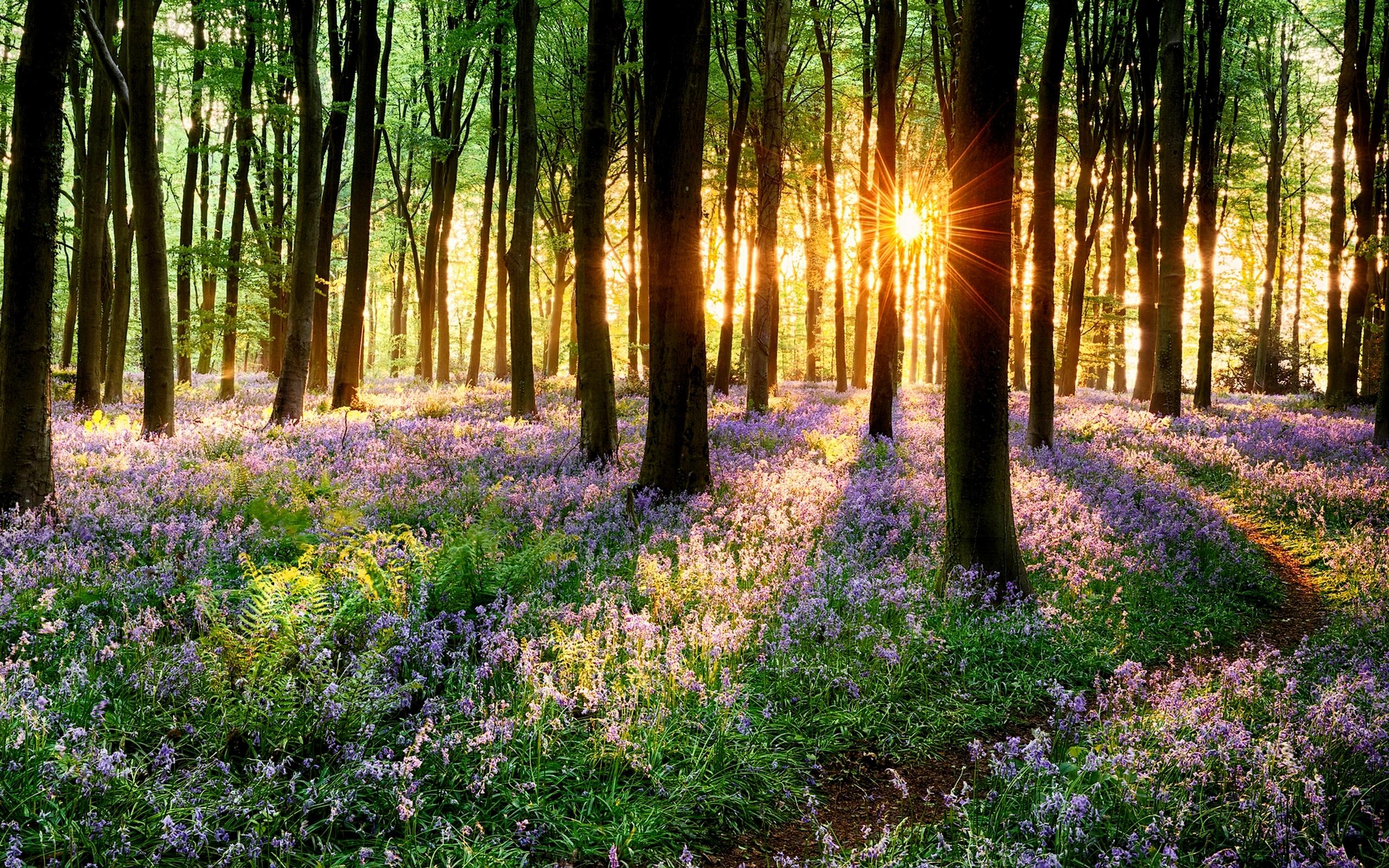 春天森林人像照片