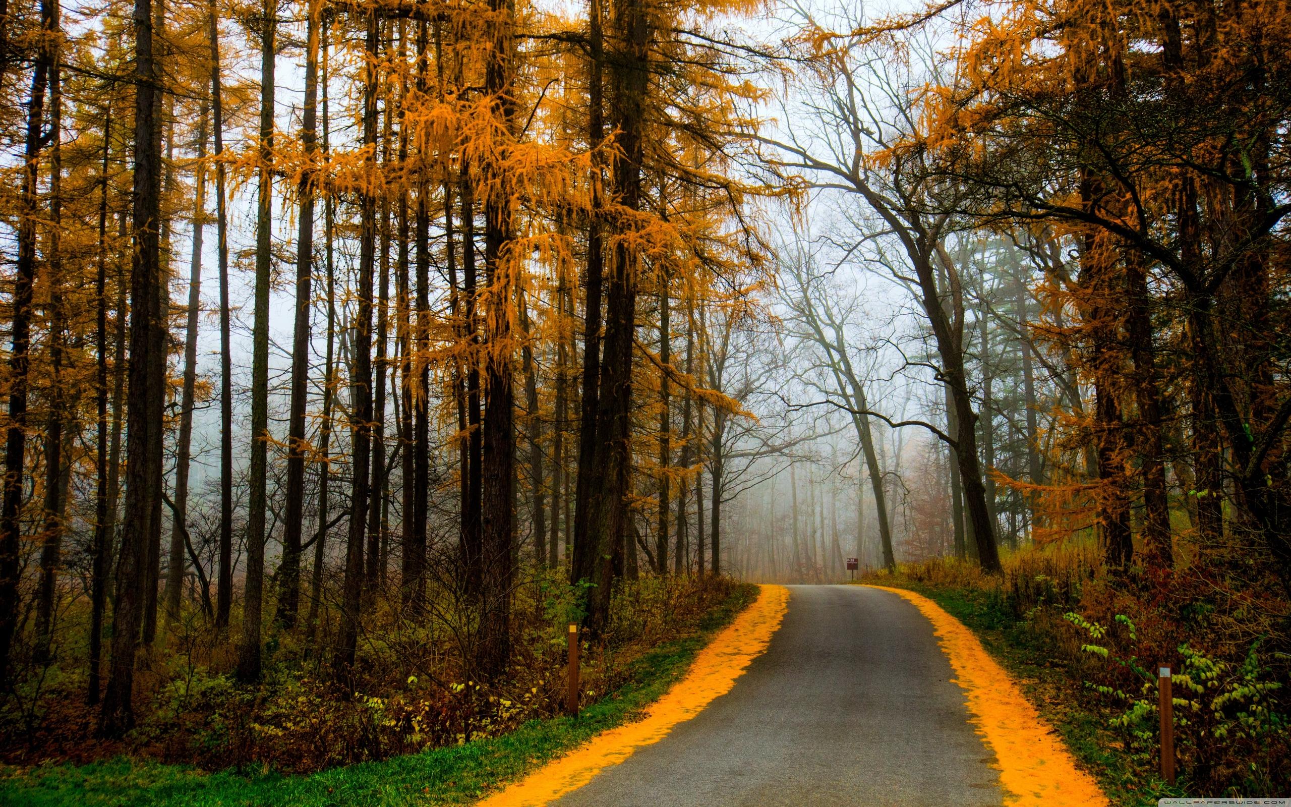 意境森林背景素材图片