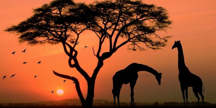 非洲africa风景壁纸