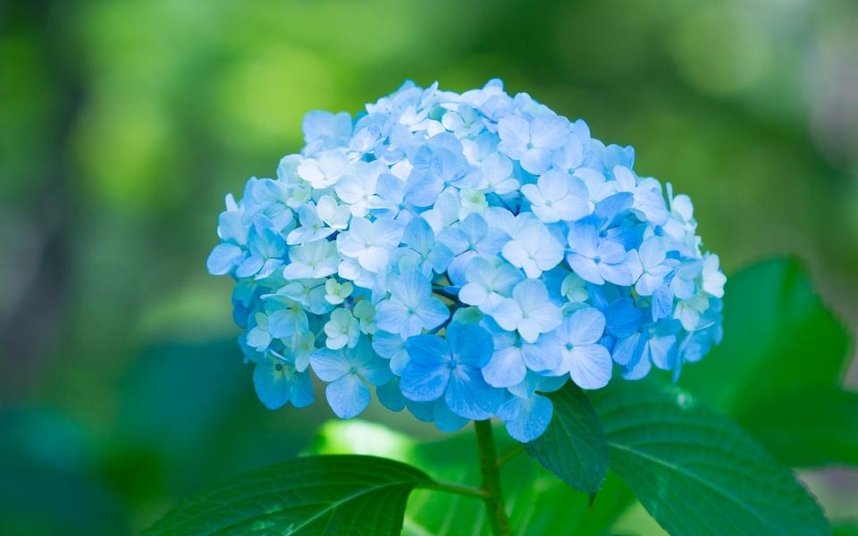 春天的植物唯美壁纸图片