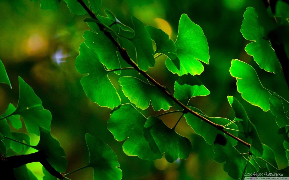 植物花卉风景壁纸下载