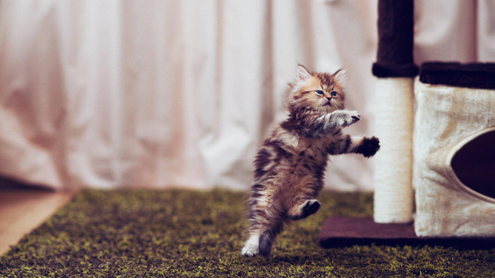 【高清图】可爱的小猫高清壁纸 第18页-zol图片频道