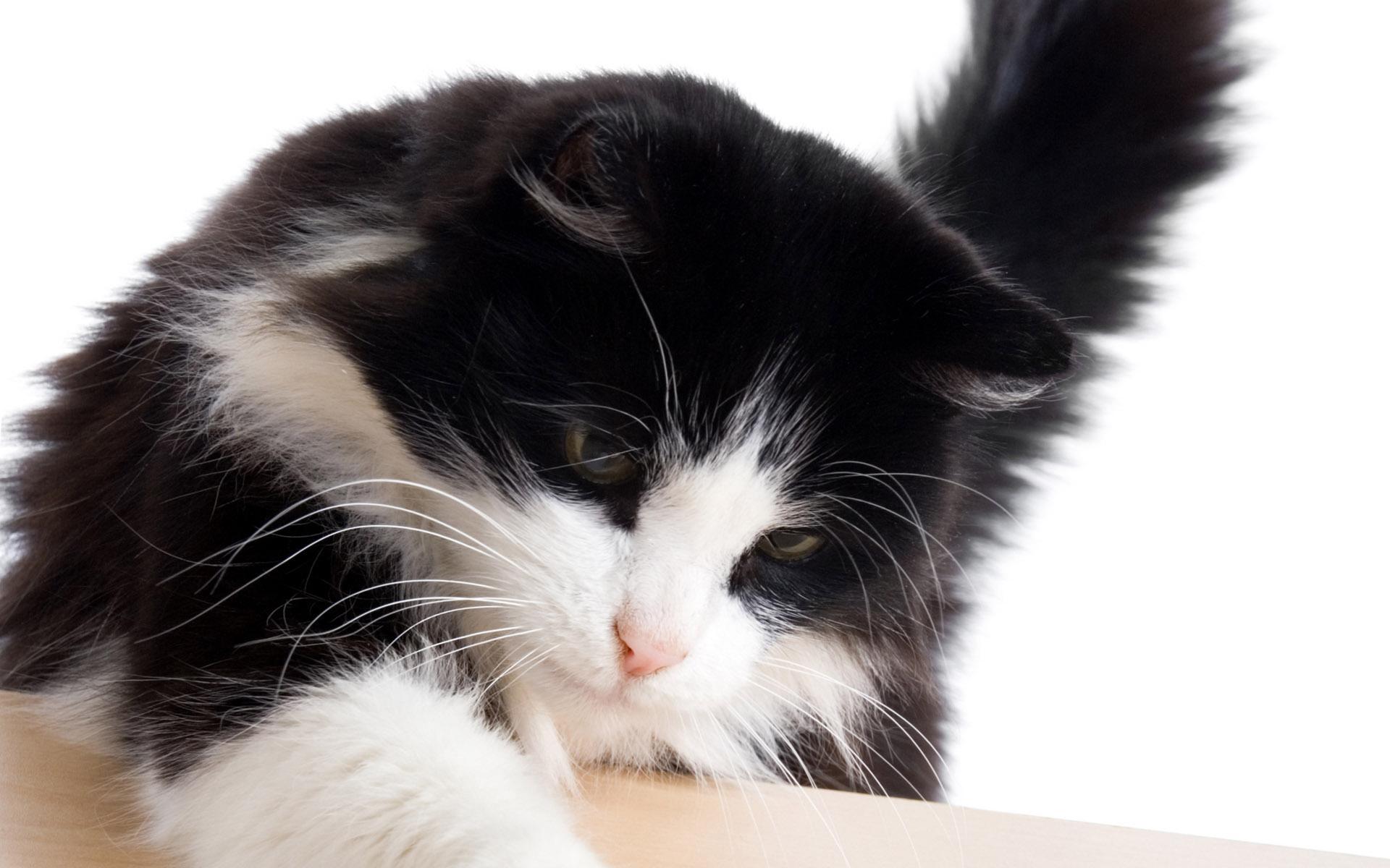 可爱猫咪高清壁纸(12/17)