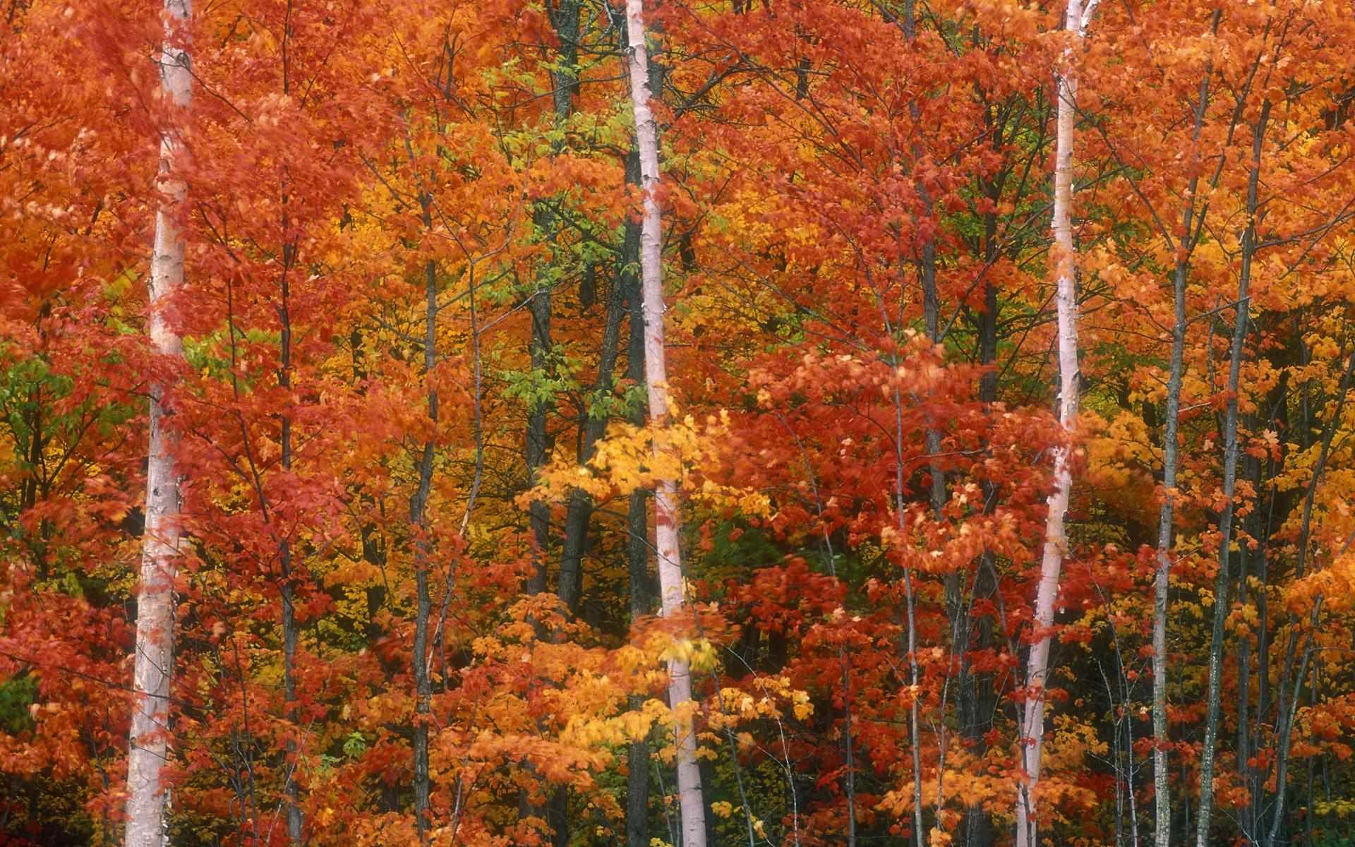 【高清图】大尺寸自然风景秋叶壁纸 第6页-zol图片频道