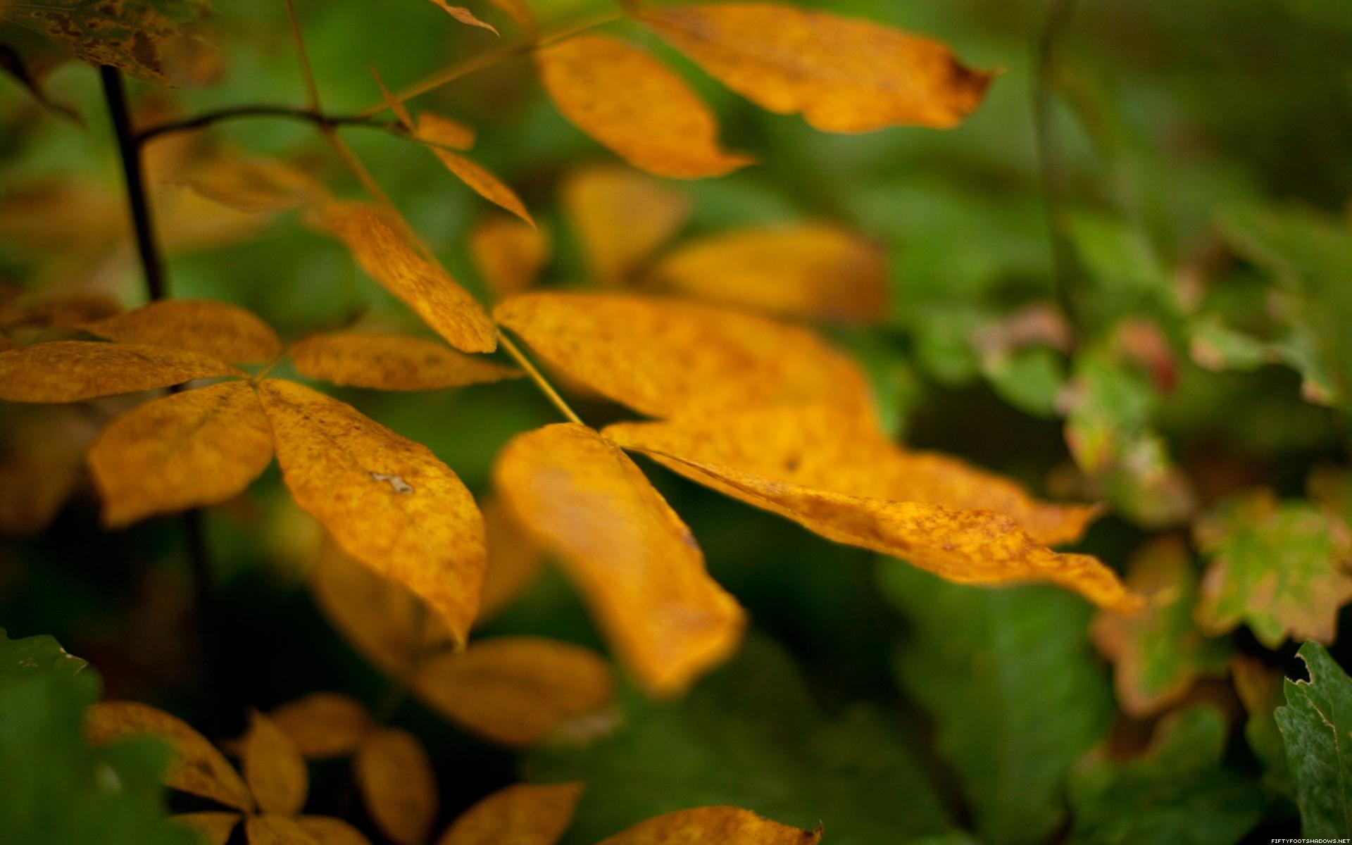 【高清图】大尺寸自然风景秋叶壁纸 第16页-zol图片