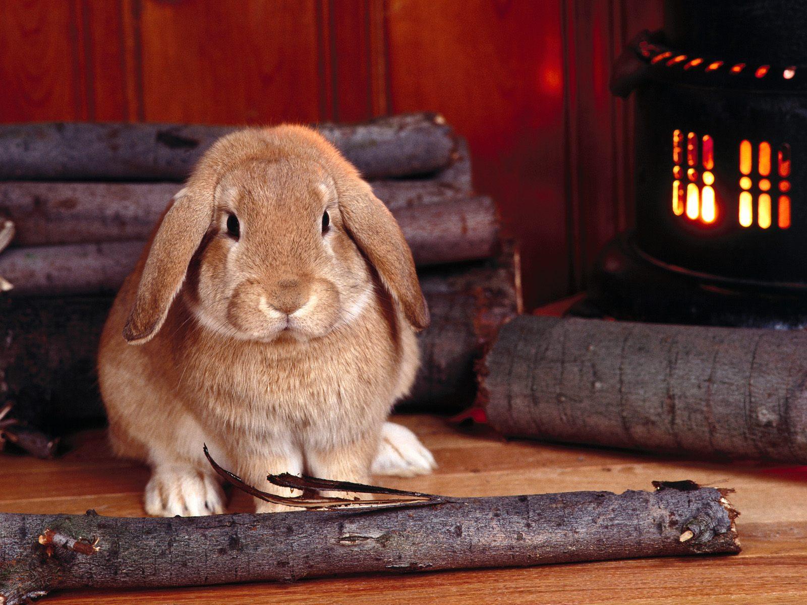 可爱小兔子高清壁纸(1/30)