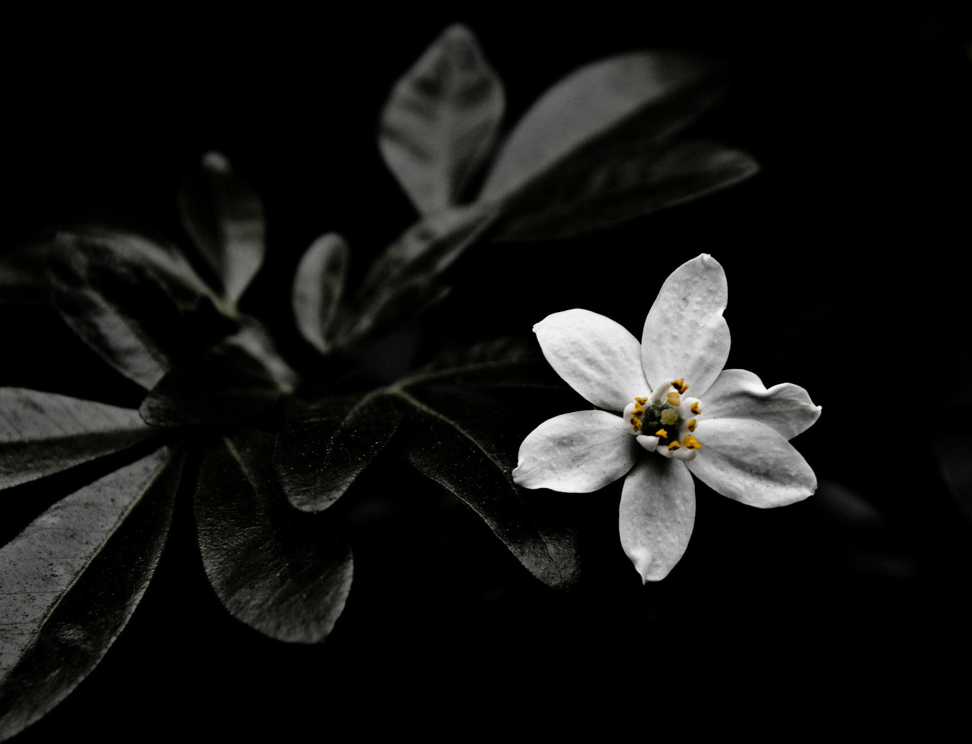 彩纸剪贴画花朵图片