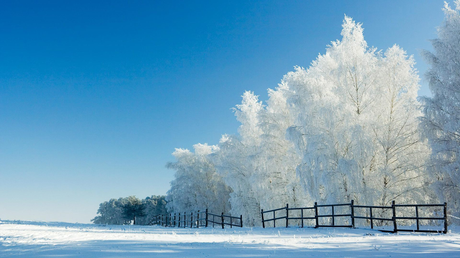 冬季清新唯美雪景桌面壁纸