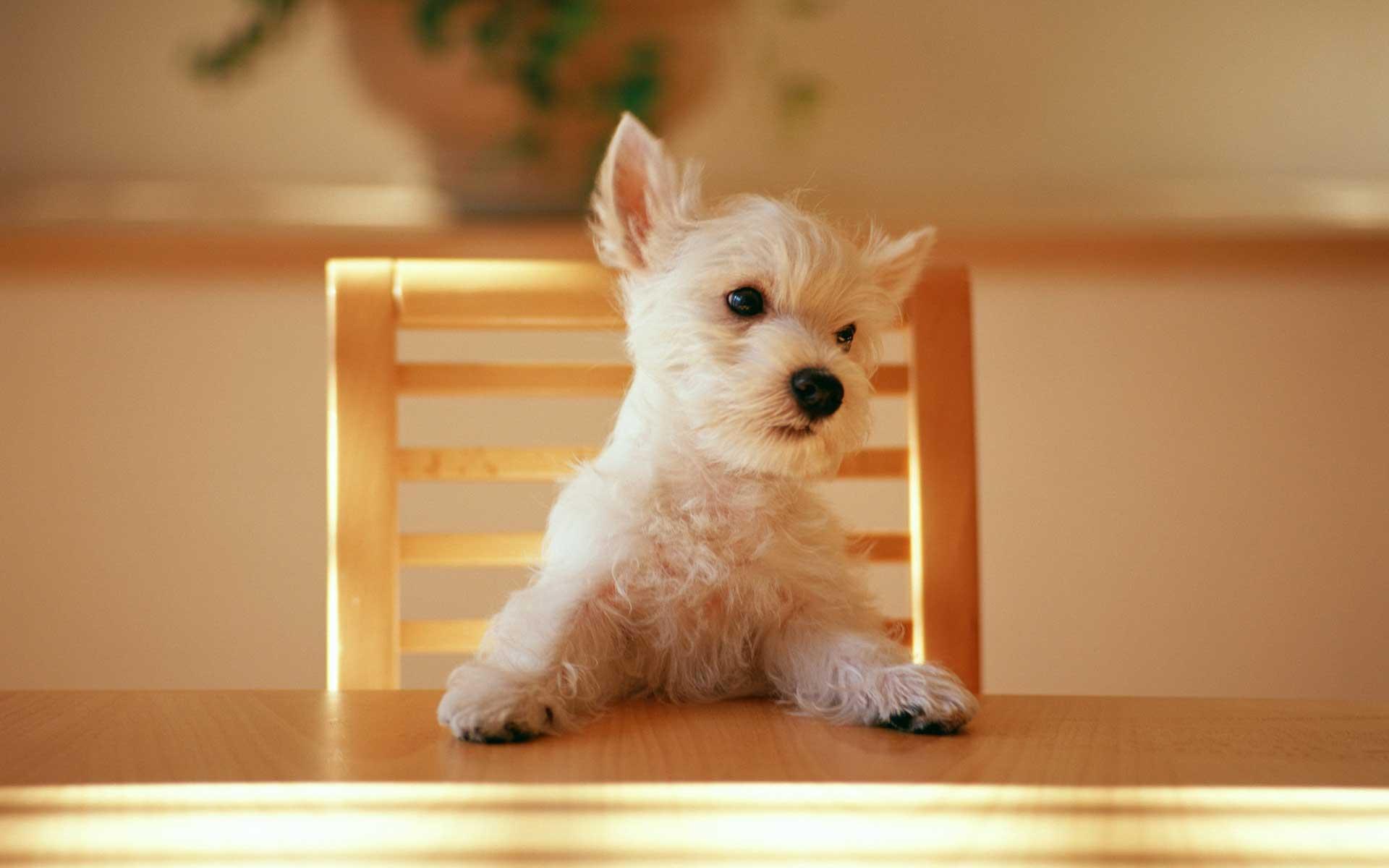 可爱小狗电脑桌面壁纸图片