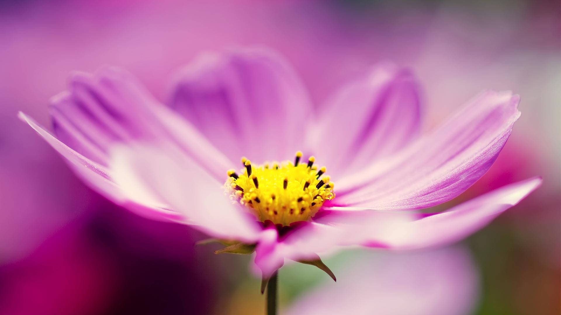 清新唯美的花儿桌面壁纸